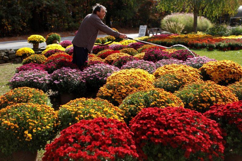Get truckin': Which flowers to deadhead - The Boston Globe