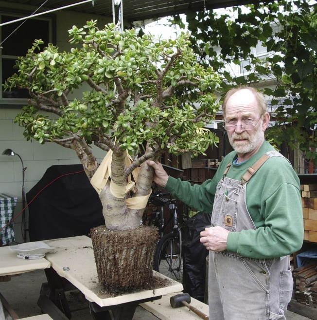 Jade plant: Readers describe their plants and seek details on care - oregonlive.com
