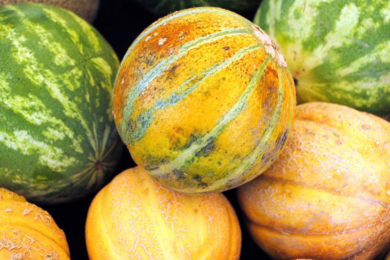 Melons 101: A Farmers Market Guide   CUESA