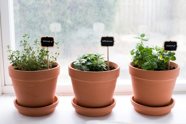 5 Key Steps to Keep Your Herb Garden Alive